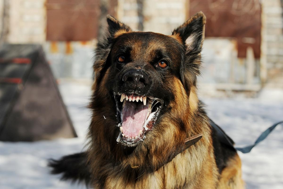 Erstatning etter hundeangrep - PersonskadeAdvokat1